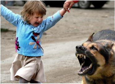 Що робити якщо вас або вашу дитину вкусила собака чи кішка?